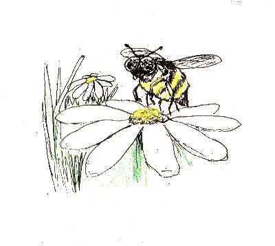 bumble bee, bee, insect