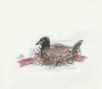 nest, bird