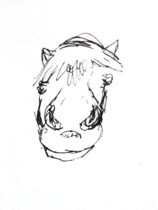 nose, horse