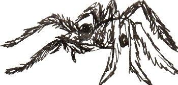 spider, arachnid