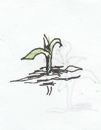 sprout, plant,grow