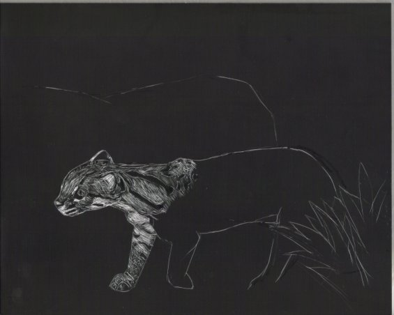 wild cat: Ocelot