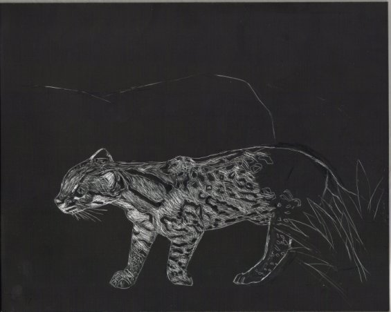 progress on wild cat: Ocelot