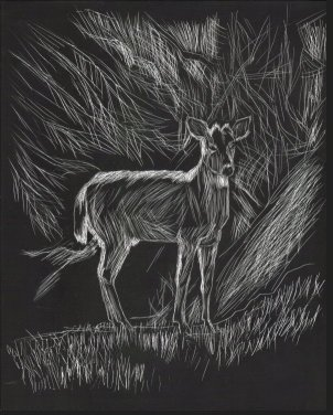 Deer, scratch board