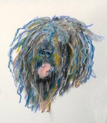 dog, hair, water dog