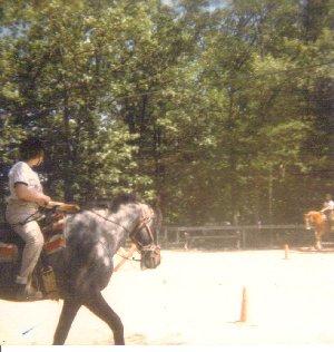 horse camp, horse
